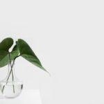 interior design, urban jungle